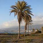Tenerife 2014- (128)